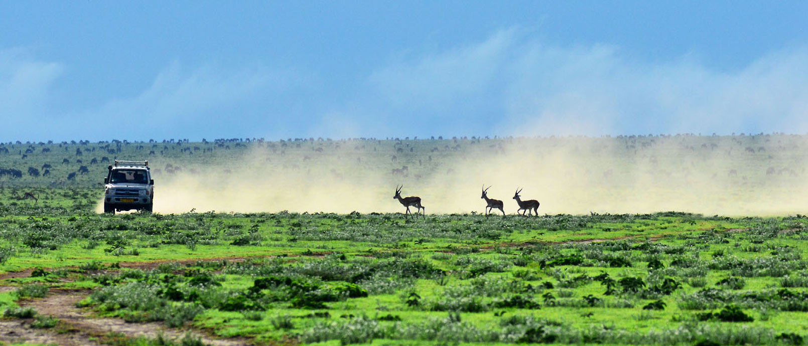 Safari en Tanzanie, les parcs essentiels 10 Jours - 9 Nuits